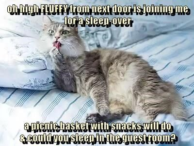 joining Fluffy sleepover sleep Caturday caption guest room