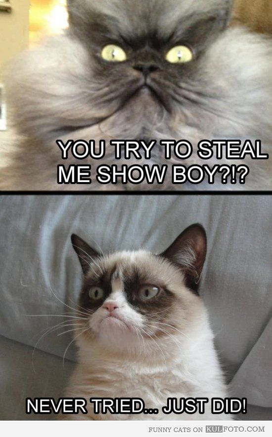 """Grumpy cat stealing the show Funny cat looking like an angry colonel is asking the grumpy cat """"You try to steal my show boy Never tried Just did """""""