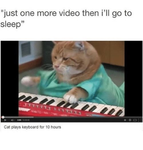"""Cats Funny and Go to Sleep """"just one more video then i"""