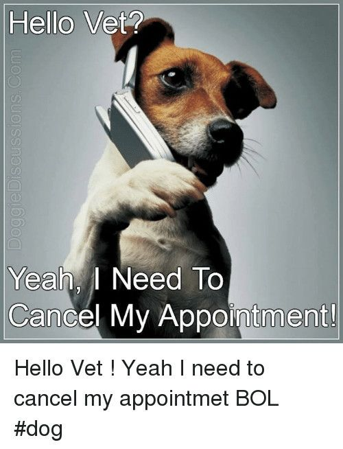 Hello Vet 0d Yeah I Need To Cancel My Appointment Hello Vet Yeahdog Meme