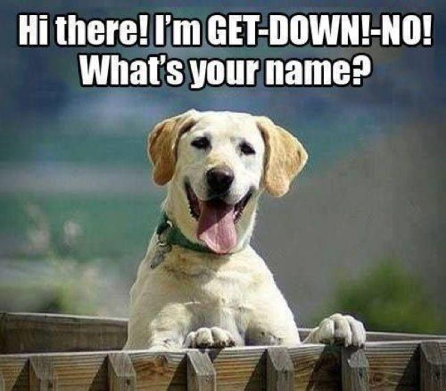 funny dog name meme