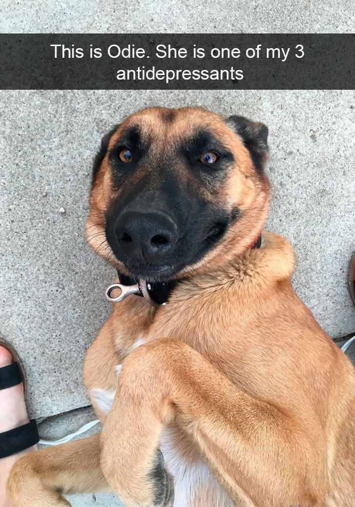 Funny Snapchats Dog – 190 Pics Funny Animals Pinterest