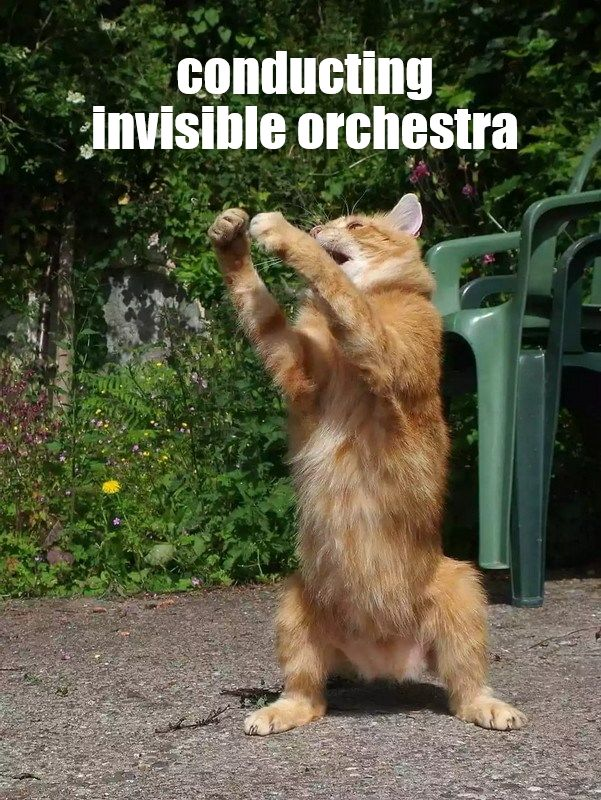 conducting invisible orchestra Funny Animal Videos Cute Animals Hilarious Animals Pretty Cats