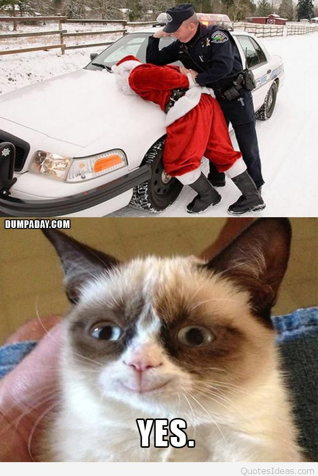 grumpy cat christmas santa s arrested makes grumpy cat happy