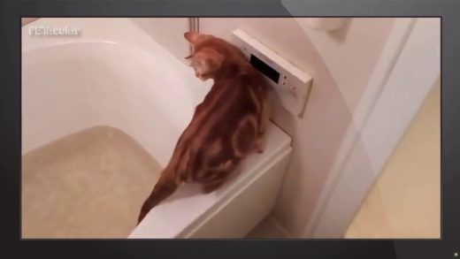 Funny Animals – Funny Cats Falling in Water pilation [NEW HD]