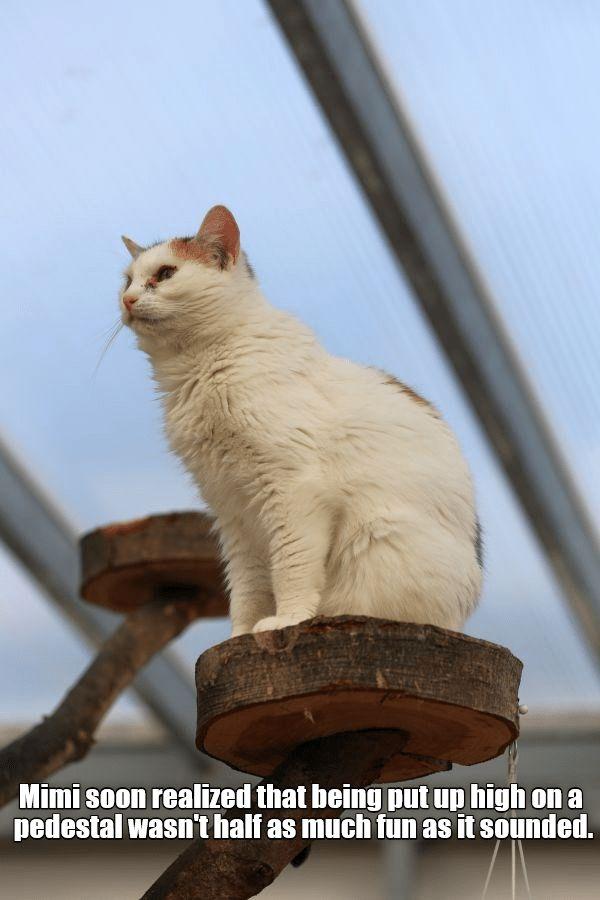 fun half cat high mimi wasnt caption realized pedestal