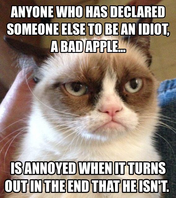 Gt Funny Amp Funny Cat Quotes Gt Top 49 Most Funniest Grumpy Cat