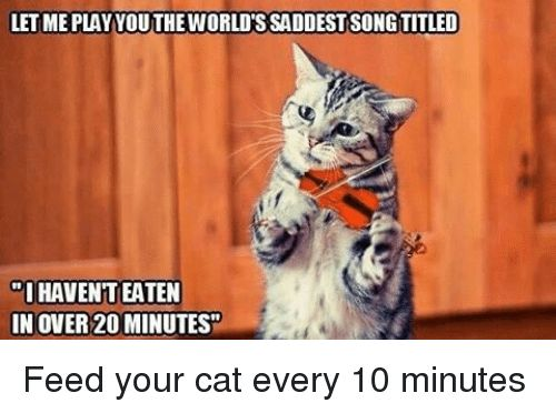 """Cats Funny and Songs LETMEPLAY VOUTHEWORLDTSSADDEST SONG TITLED """"I HAVENTEATEN IN OVER"""