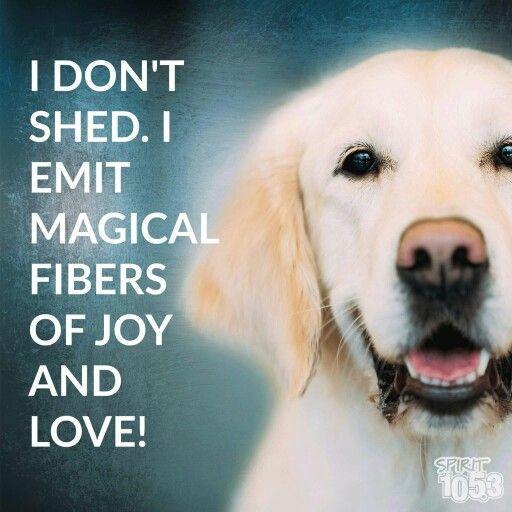 I don t shed I emit magical fibers of joy and love