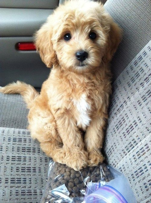 Puppies images cute puppy dog wallpaper and background photos