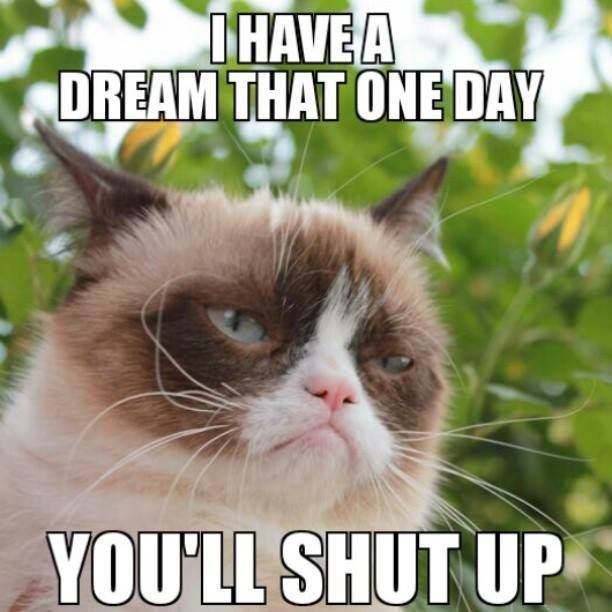 20 The Funniest Grumpy Cat Memes