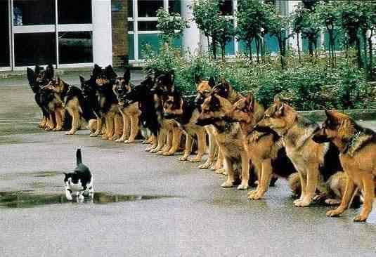Police dog training My dog would not pass this test Lol