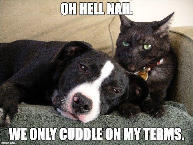 No cuddle cat