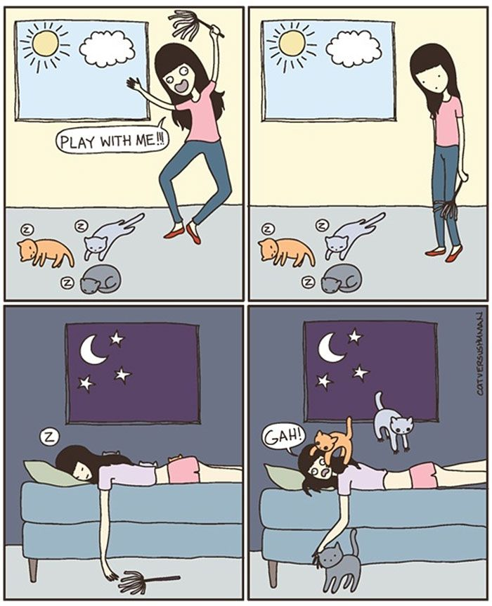 The Reality Owning A Cat