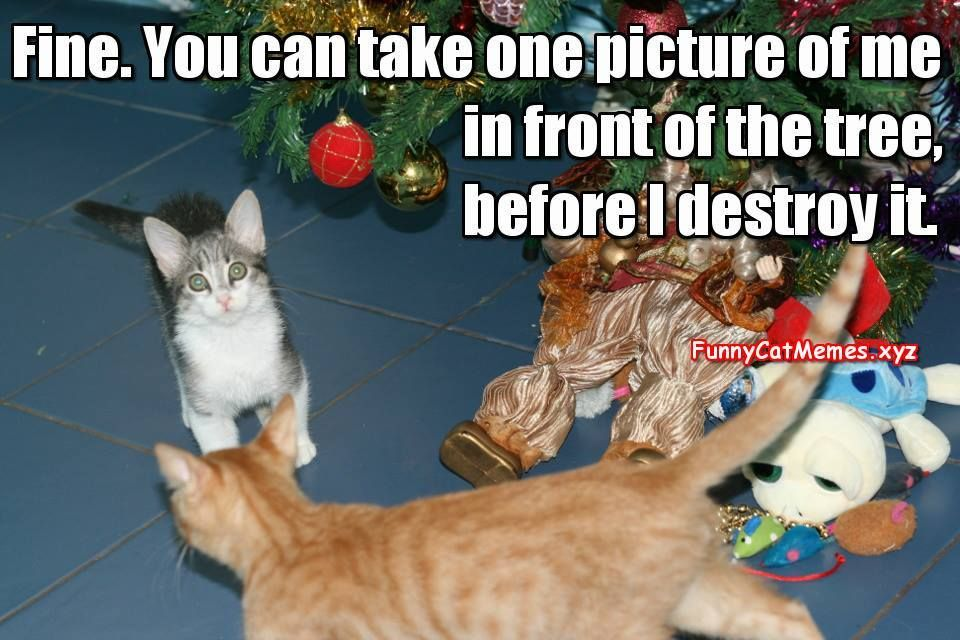 Cat And The Christmas Tree Funny Kitten Meme
