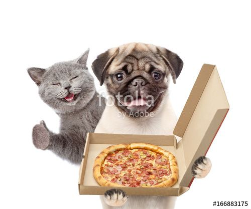 Funny cat and puppy with open pizza boxes isolated on white background
