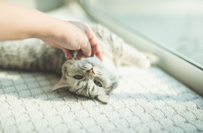 15 Signs Your Cat Is Happy