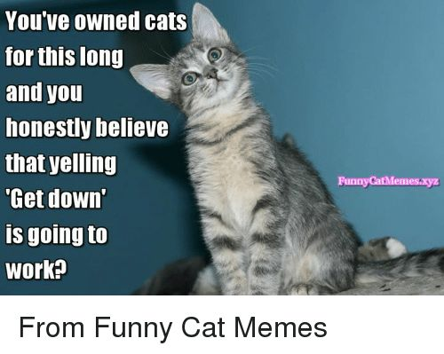 Memes 🤖 and Yelle You Ve OWned cats for this long and you