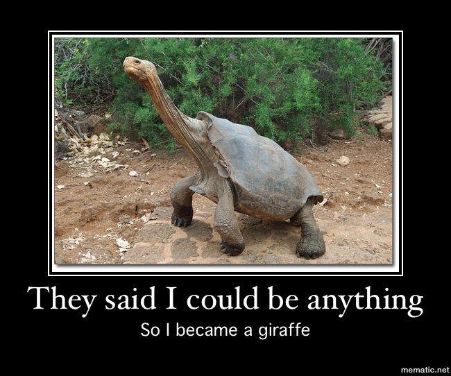 Turtle meme