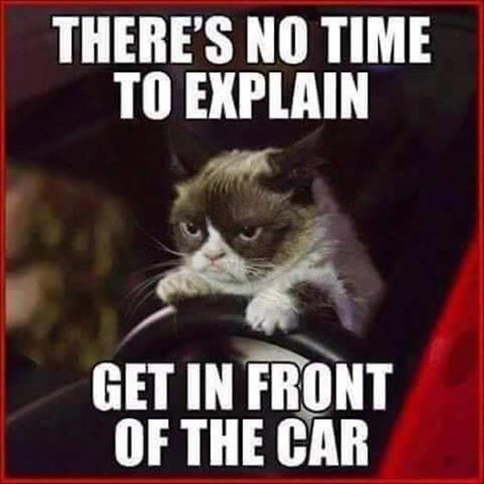 Catch the Elegant Super Funny Grumpy Cat Memes