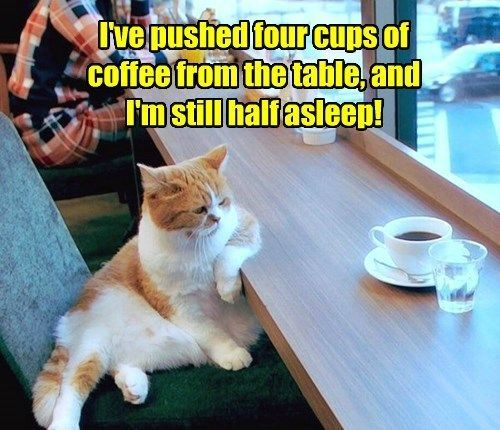 This cat so cool he didn t restaurant coffee that sez something Get me some grumpy cat coffee I m tired party catnip to hard last night