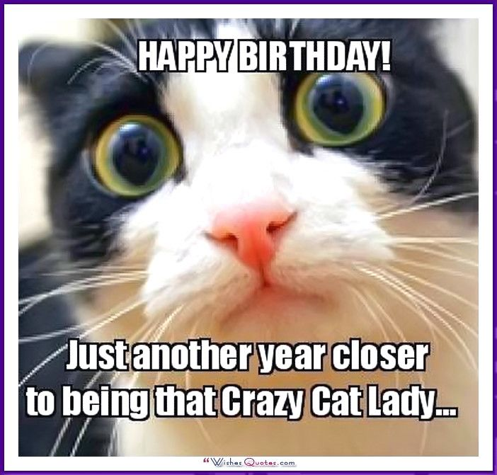 Birthday Meme with a Cat Another year closer to being that crazy cat lady