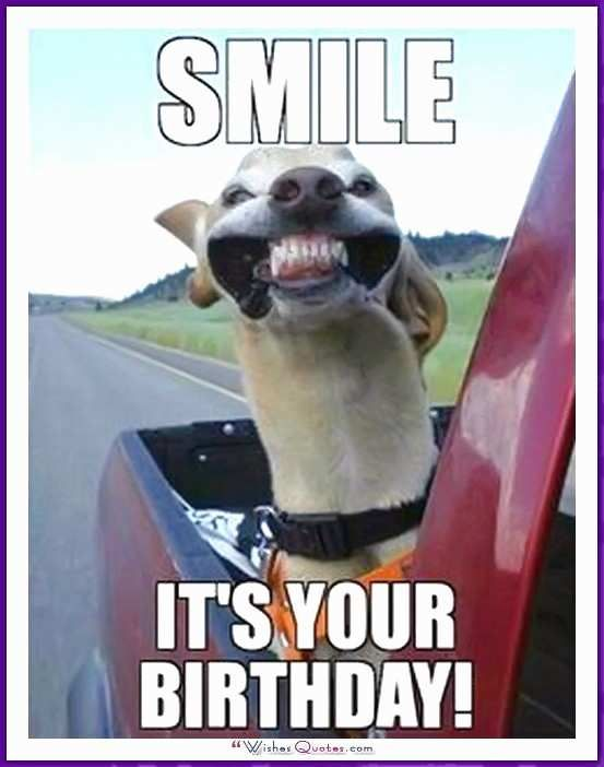 Crazy Cat Lady Birthday Meme Best Happy Birthday Memes with Funny Cats Dogs and Cute Animals
