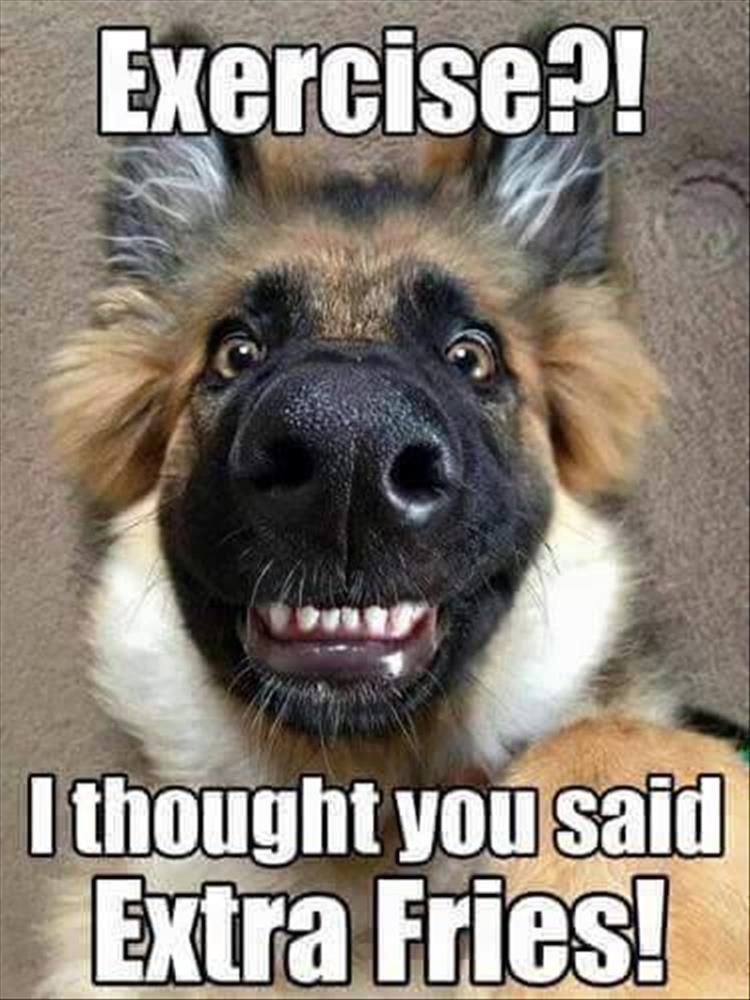 funny animal pictures of the day 36 pics dog quotes pinterest