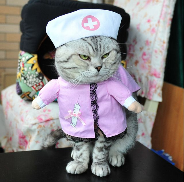 Catch the Fascinating Funny Nurse Cat Pictures