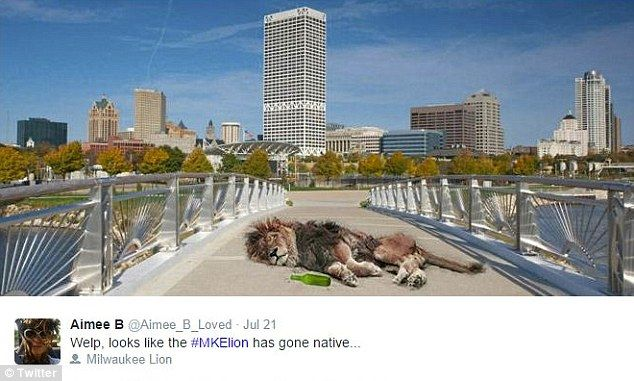 The Milwaukee lion has provided internet pranksters plenty of ammunition for their latest series of memes