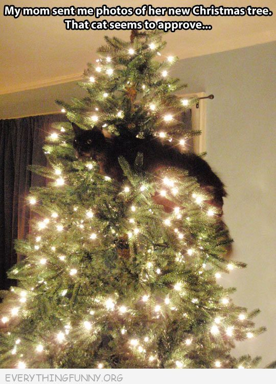funny cat pictures funny cat photos funny cats funny christmas photos