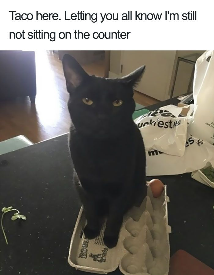 funny cat shaming