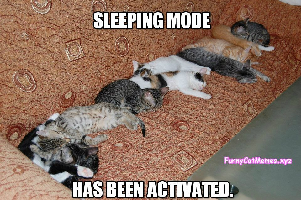 Sleeping Mode Has Been Activated Funny Cat Meme