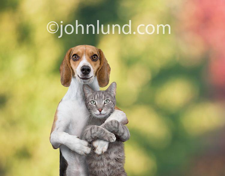 Cat Dog Best Friends