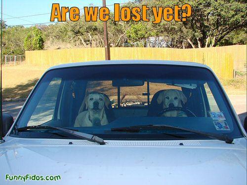 Lost Puppy butt crack