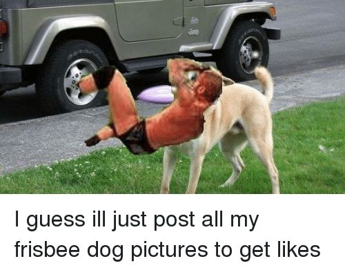 Dogs Guess and I guess ill just post all my frisbee dog