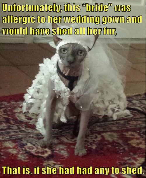animals costume cat wedding dress hairless