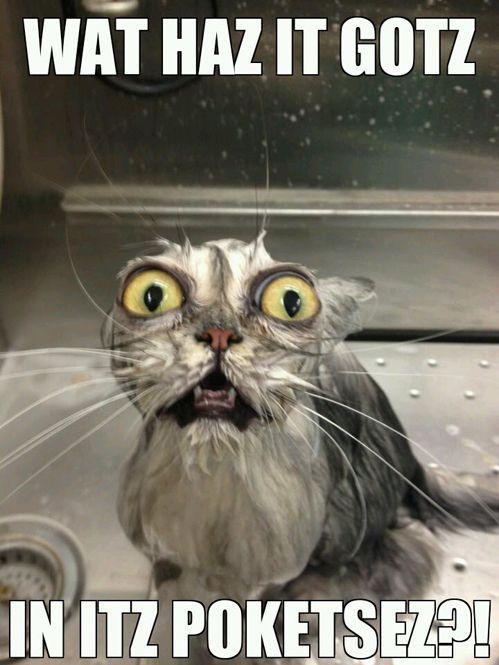 Gollum cat must know