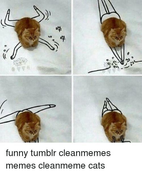 Cats Memes and 🤖 ND っ å˜¤å– ã£ funny tumblr cleanmemes
