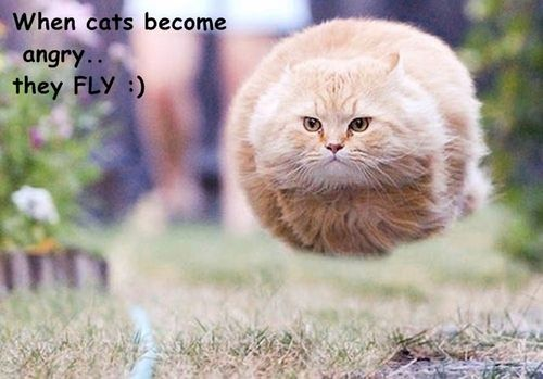 really funny cat and funny quote on We Heart It