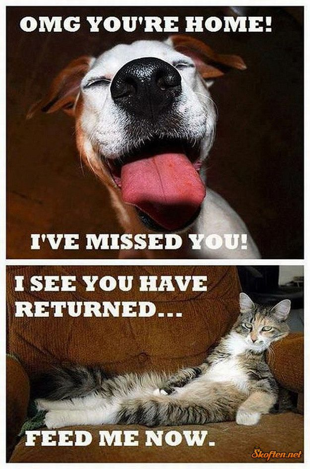 This is a great example of why I like dogs and not cats I Love