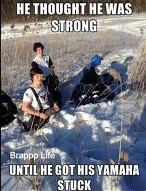 Arctic Cat Memes Funny Www Picsbud