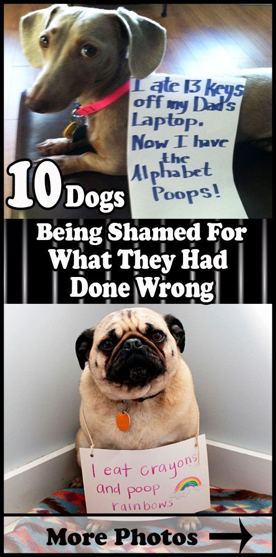 10 Dogs Being Shamed For What They Had Done Wrong Here are some dog shaming pics that show you how silly and naughty dogs can be Animals