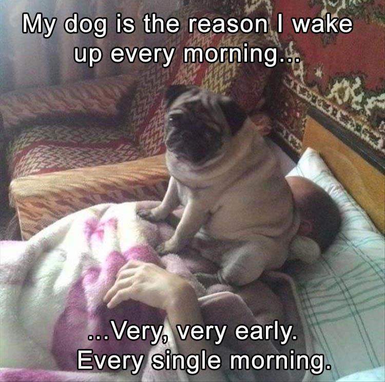 Funny Animal The Day 25 Pics