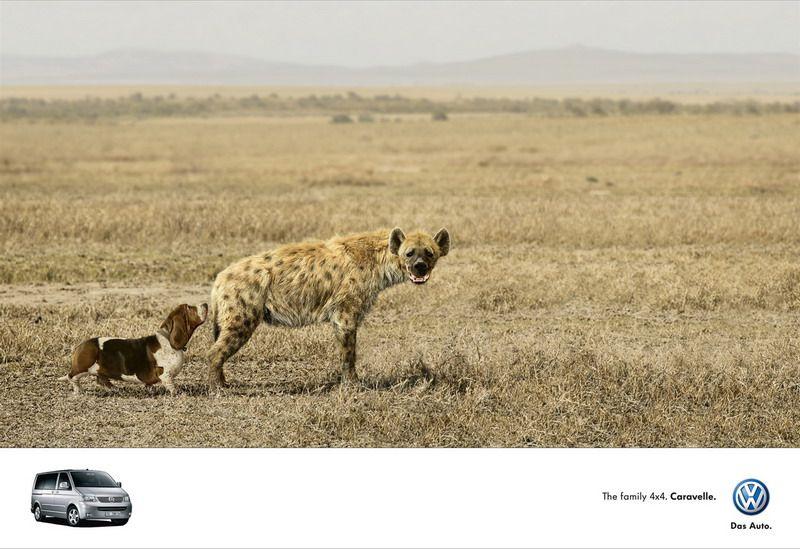 Creative Advertisement Using Animal Seen