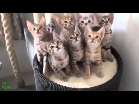 Hot Funny Cats Video on LOL