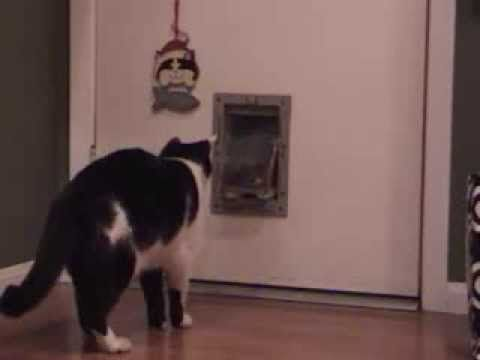 A Fat Kitty Can t Make It Through a Skinny Cat Door