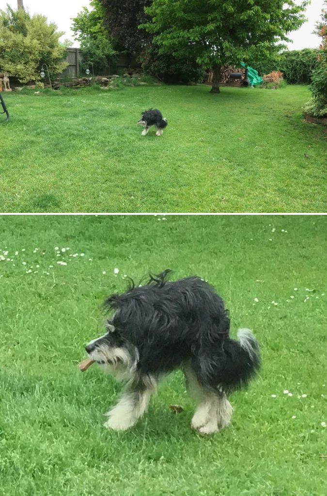 I regret trying to take a cute panorama of my dog