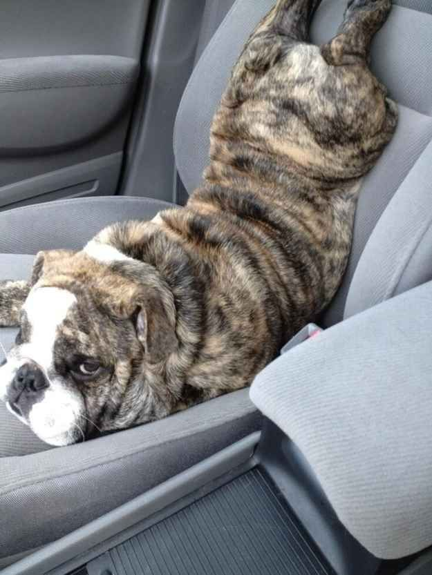 This guy was told to buckle his seatbelt