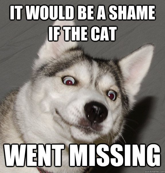 Catch the Incredible Funny Husky Cat Pictures